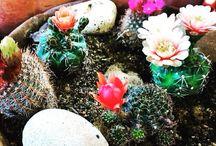 Çiçeklerin son modası kaktüsler / Çiçeklerin son modası kaktüs çiçekleri farklı ve özel tasarımlarıyla çok yakında www.escicek.com'da  #escicekcom #yakında #kaktüs #çiçekler #tasarım #salı #tünaydın