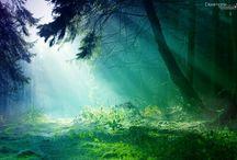 Alice in Wonderland / Alice nel Paese delle meraviglie