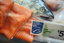 Seafood Trends & Supply Chain