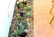 GARD-N_ Succulents and cactus