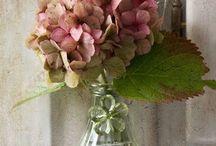 Flores/decoração