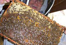 Prírodné včelárenie