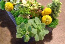 Succulents / www.sprigsfloraldesigns.com