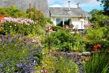 Gardens at Pen Y Garn Cottage / there are an acre of gardens at Pen Y Garn which are an ongoing project!
