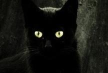 My Love, Black Cats <3 / by Kiara Colon