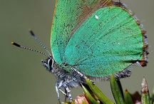 Zielone motyle
