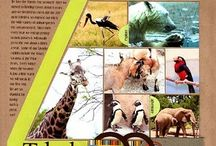 Layouts: Wild & ZOO