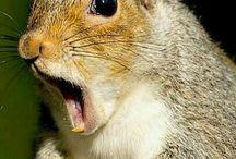 scoiattoli