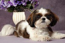 Puppy / by Monica Bautista