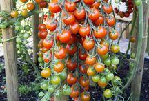 Garten und Pflanzen / Tolle Ideen rund um die Pflanzenwelt