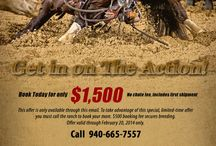 Equestrian Marketing Ads and Signs / Advertising for Horse Businesses - Signs, Print Ads, and online ads.