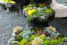 Succelent gardens