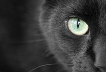 Cats  / The Mysterious Black Cat, Sabbath, and how her Gift solves a murder and chases ghosts away.