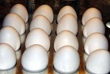 Eat: Incredible Edible Eggs