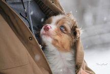Perros De Bebés