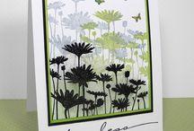 Flowers / Daisies