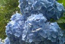Plants Flowers Shrubs Trees / by Kelli Owens