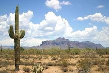 Arizona / by Tjitske Tubbergen