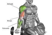z - sport - muscles