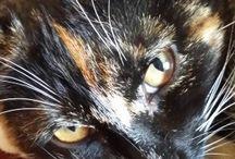 tortoise shell cats like my Minnie