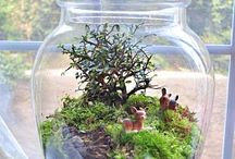 Terrarium.  / by Heather Roddy