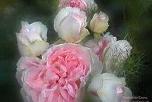 flowers / by Linda Lennea