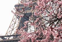 Paris: la vie en rose!
