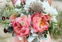 Amy Thomas and Ashley / August 2015 -  Full, open, large blooms with lots of foliage.