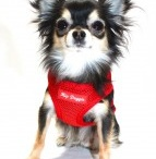Little Dogs Are Cool! / Please post your Pics of your Cool Little Dogs.   Thanks for Sharing!!!!