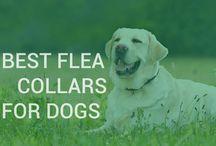 No more fleas