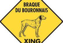 Braque du Bourbonnais Signs and Pictures / Warning and Caution Braque du Bourbonnais Signs. https://www.signswithanattitude.com/braque-du-bourbonnais-signs.html