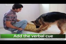 Dogs - Tipps, Tricks, Training