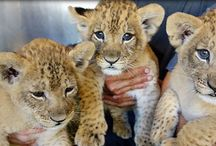Honolulu Zoo and Animals