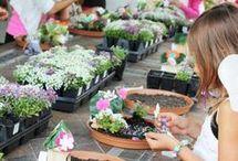 Fairy Garden Party Ideas