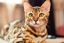 katzen&andere tiere