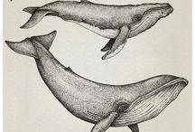 Disegni balene