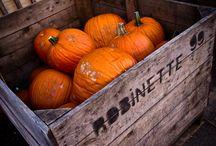 fall & winter / by Lindsey Kessler