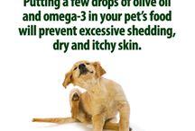 Koiran hoito