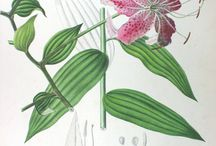 paisagismo/botanica