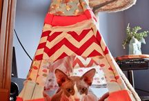 DIY Pet Projects / Get crafty, for yourself and your pet!