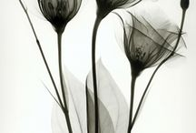radiographed flowers