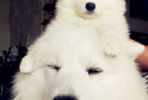 doggie.s