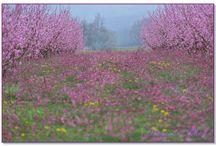 Provence et Alsace