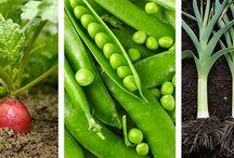 A vos potagers ! / Dans ce tableau, découvrez comment cultiver vous-même vos fruits et légumes pour manger sainement et être davantage autonome dans votre alimentation.