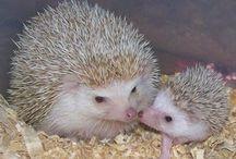 Igels mom & kid