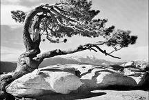 Ansel Adams / by Ellen Shutts