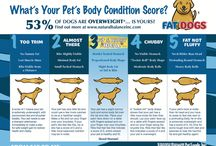 Lovable Fat Dogs and Fat Cats Contest / by Natural Balance Pet Foods
