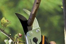 Gardening - pruning