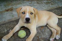 Keverékek - Mixed Breed Dogs