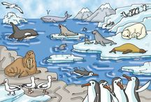 Thema Noordpool-Zuidpool